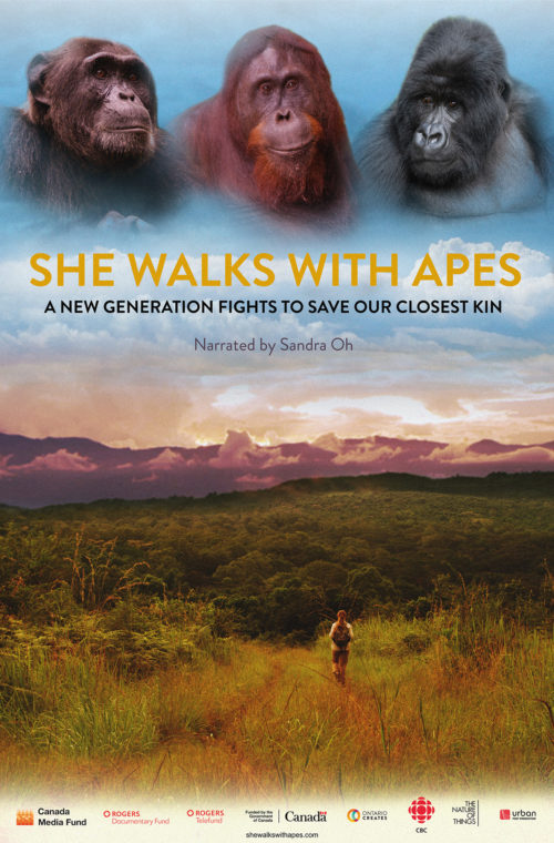 'She Walks With Apes on CBC' core news picture